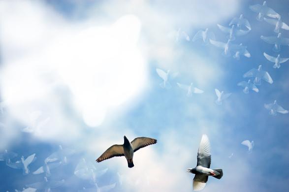 pigeons_riquet